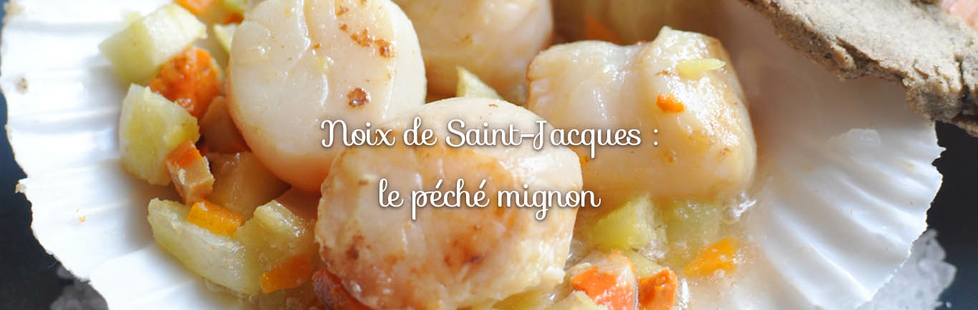noix de saint jacques
