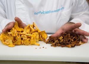 Tout savoir sur les champignons envie de bien manger - Champignons secs comment les cuisiner ...