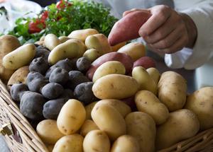 Tout savoir sur les pommes de terre pour bien les cuisiner
